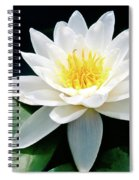 Beautiful Water Lily Capture Spiral Notebook