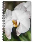 Beautiful White Orchids Flower Bloom Spiral Notebook