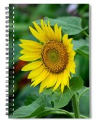 Beautiful Yellow Sunflower In Full Bloom Spiral Notebook