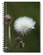Beauty Among The Thistles Spiral Notebook