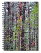 Beauty In Nature 2 Spiral Notebook