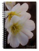 Beauty In The Canyon 2 Spiral Notebook