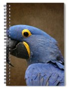 Beauty Is An Enchanted Soul - Hyacinth Macaw - Anodorhynchus Hyacinthinus Spiral Notebook
