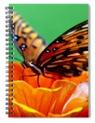 Beauty Of Shannon Spiral Notebook