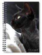 Beauty Of The Rex Cat Spiral Notebook