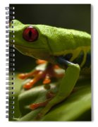 Beauty Of Tree Frogs Costa Rica 3 Spiral Notebook