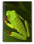 Beauty Of Tree Frogs Costa Rica 6 Spiral Notebook