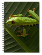 Beauty Of Tree Frogs Costa Rica 8 Spiral Notebook