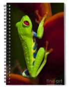 Beauty Of Tree Frogs Costa Rica 9 Spiral Notebook