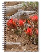 Beauty On 25 Mesa  Spiral Notebook