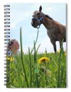 Beauty Spiral Notebook