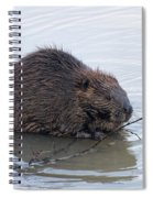 Beaver Chewing On Twig Spiral Notebook