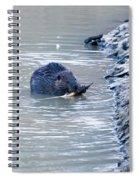 Beaver Chews On Stick Spiral Notebook