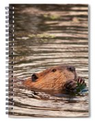 Beaver Feeding Spiral Notebook