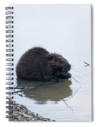 Beaver In The Shallows Spiral Notebook