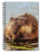 Beaver Portrait On Canvas Spiral Notebook