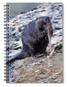 Beaver Sharpens Stick Spiral Notebook
