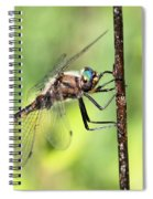 Beaverpond Baskettail Dragonfly Spiral Notebook