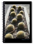 Bed Of Barrel Cacti  Spiral Notebook