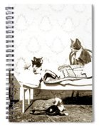 Bed Time For Kitty Cats Histrica Photo Circa 1900 Spiral Notebook