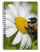 Bee And Daisy Spiral Notebook