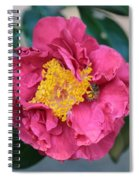 Bee And Wasp On Camellia Spiral Notebook