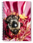 Bee Close Up On Pinkish Red Flower Spiral Notebook