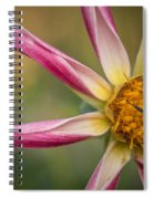 Bee Enjoying A Willie Willie Dahlia Spiral Notebook