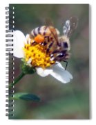 Bee- Extracting Nectar Spiral Notebook
