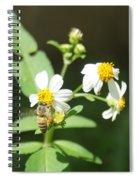 Bee-flower Pollen Spiral Notebook