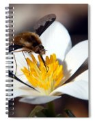 Bee Fly And Bloodroot Spiral Notebook