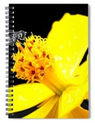 Bee In Black And White Spiral Notebook