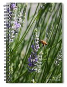 Bee In Lavender Spiral Notebook