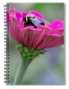 Bee In Pink Flower Spiral Notebook