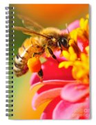 Bee Laden With Pollen Spiral Notebook