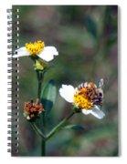 Bee- Nectar Spiral Notebook