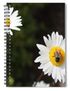Bee On A Daisy 2 Spiral Notebook