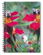 Bees On A Marigold 4 Spiral Notebook