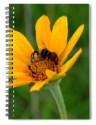 Bee On A Smooth Oxeye Spiral Notebook