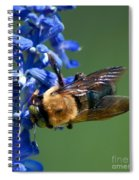 Bee On Blue Spiral Notebook