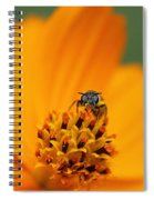 Bee On Cosmo Spiral Notebook