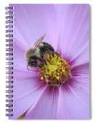 Bee On Cosmos Spiral Notebook