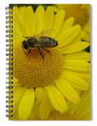 Bee On Daisy Spiral Notebook