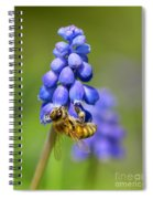 Bee On Grape Hyacinth Spiral Notebook
