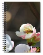 Bee On Japanese Quince Spiral Notebook