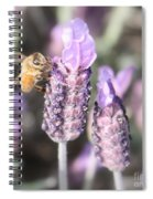 Bee On Lavender Square Spiral Notebook