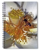 Bee On Lotus Spiral Notebook