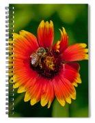 Bee On Orange Flower Spiral Notebook