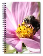 Bee On Pink Cosmos Spiral Notebook