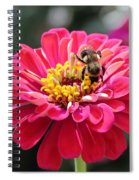 Bee On Pink Flower Spiral Notebook